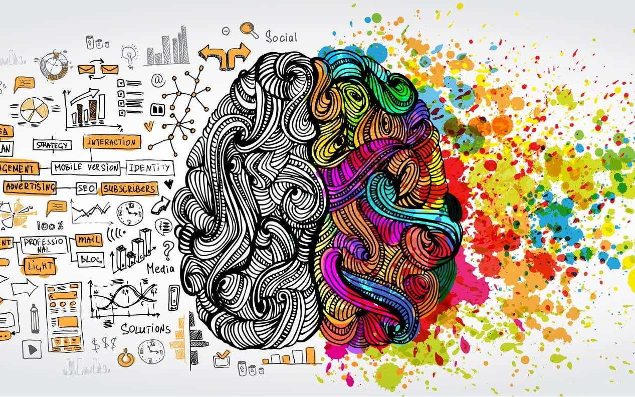 Le cerveau gauche serait plutôt rationnel et le droit créatif. © kirasolly, Fotolia
