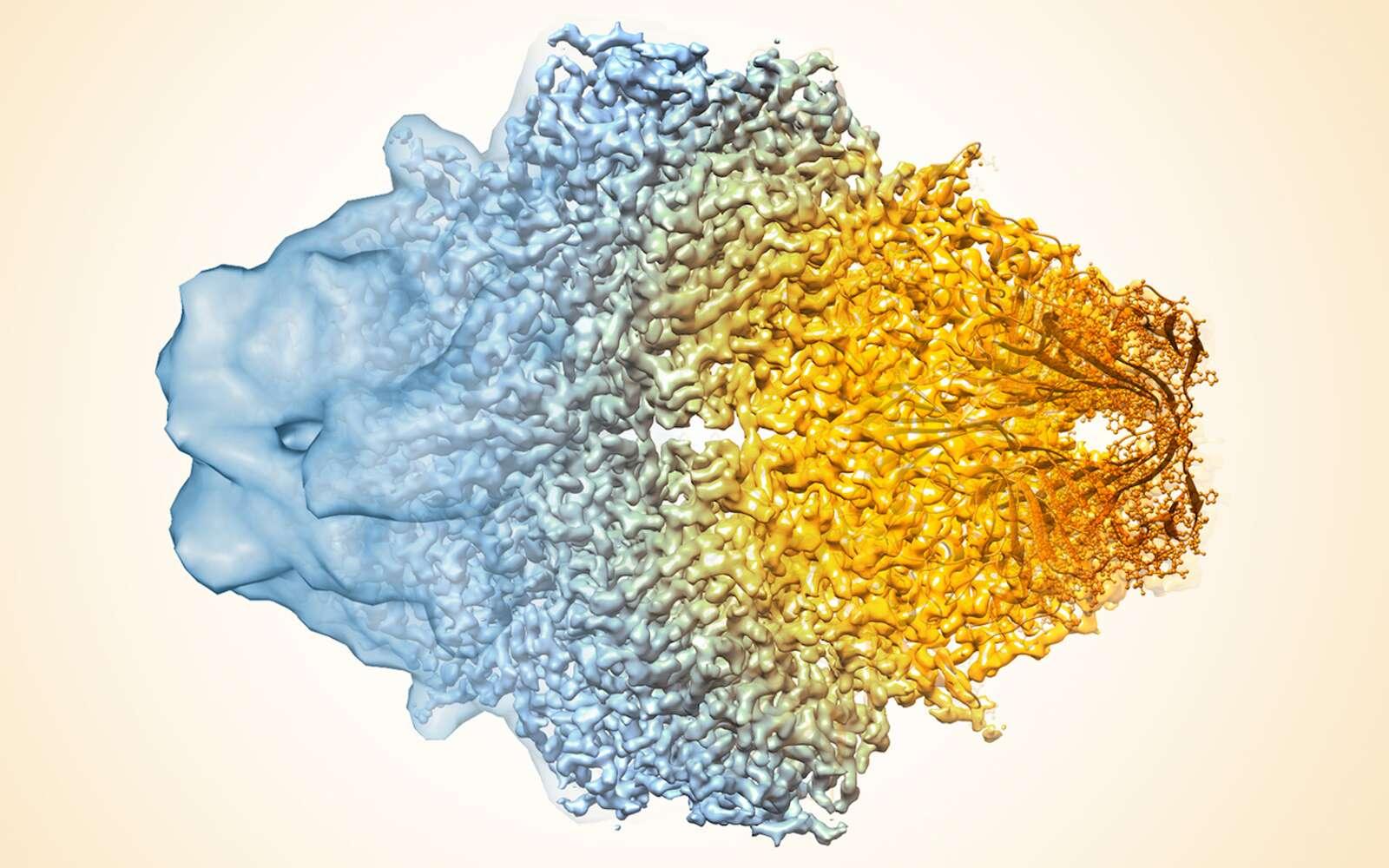 La cryo-microscopie permet d'observer des détails à l'échelle de l'atome. © NIH