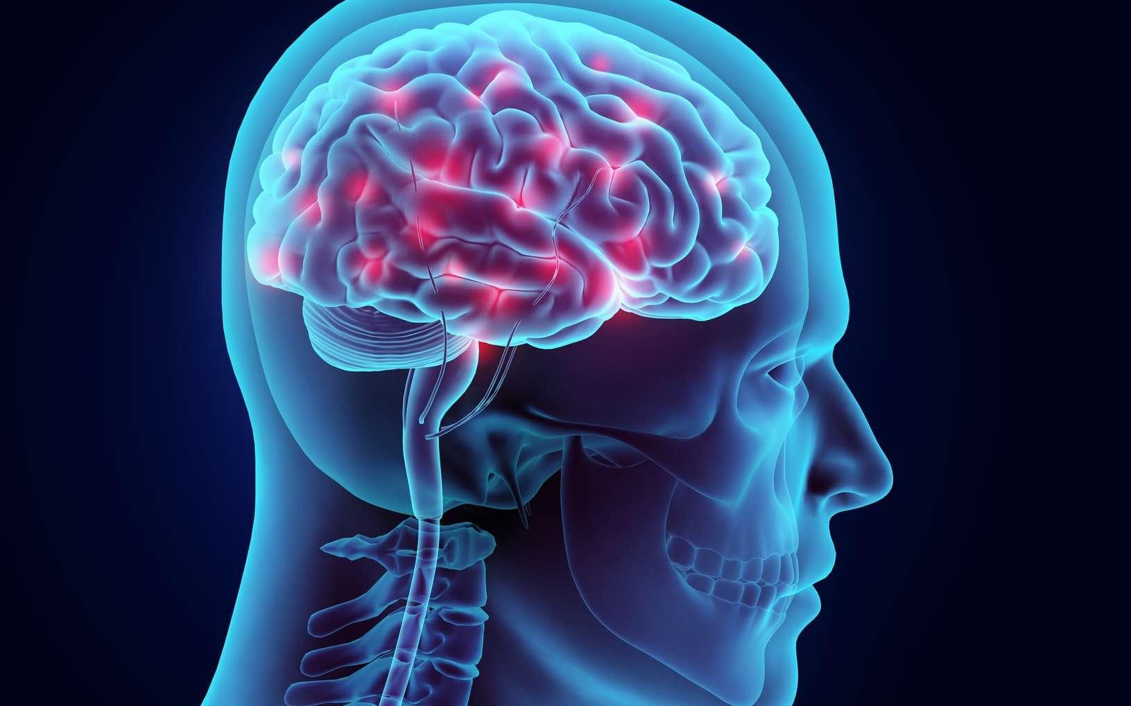 L'objectif de ces travaux est de remplacer les neurones à dopamine manquant en reprogrammant d'autres cellules cérébrales. © yodiyim, Fotolia