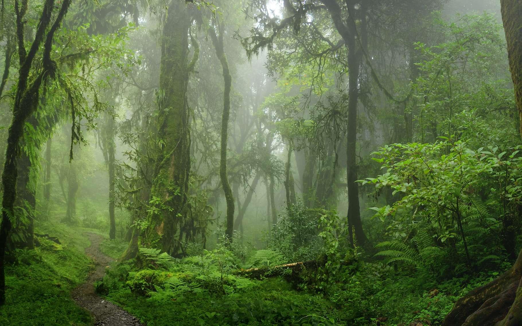 Selon les chercheurs, chaque seconde, c'est l'équivalent d'un terrain de foot de forêt tropicale humide qui disparaît. © quickshooting, Adobe Stock