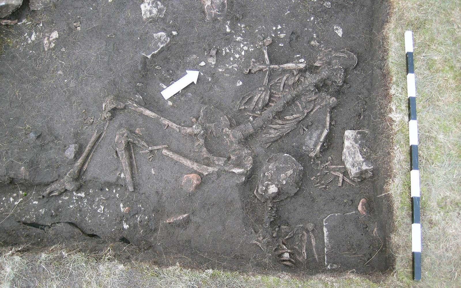 Squelette retrouvé sur le site d'Öland. © Max Jahrehorn, Kalmar läns museum