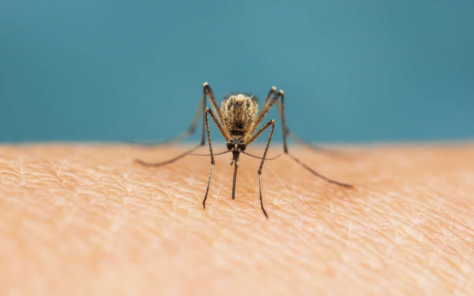 Les bactéries et champignons de notre peau émettent une « signature chimique » qui attire plus ou moins les moustiques. © Nataba, Fotolia