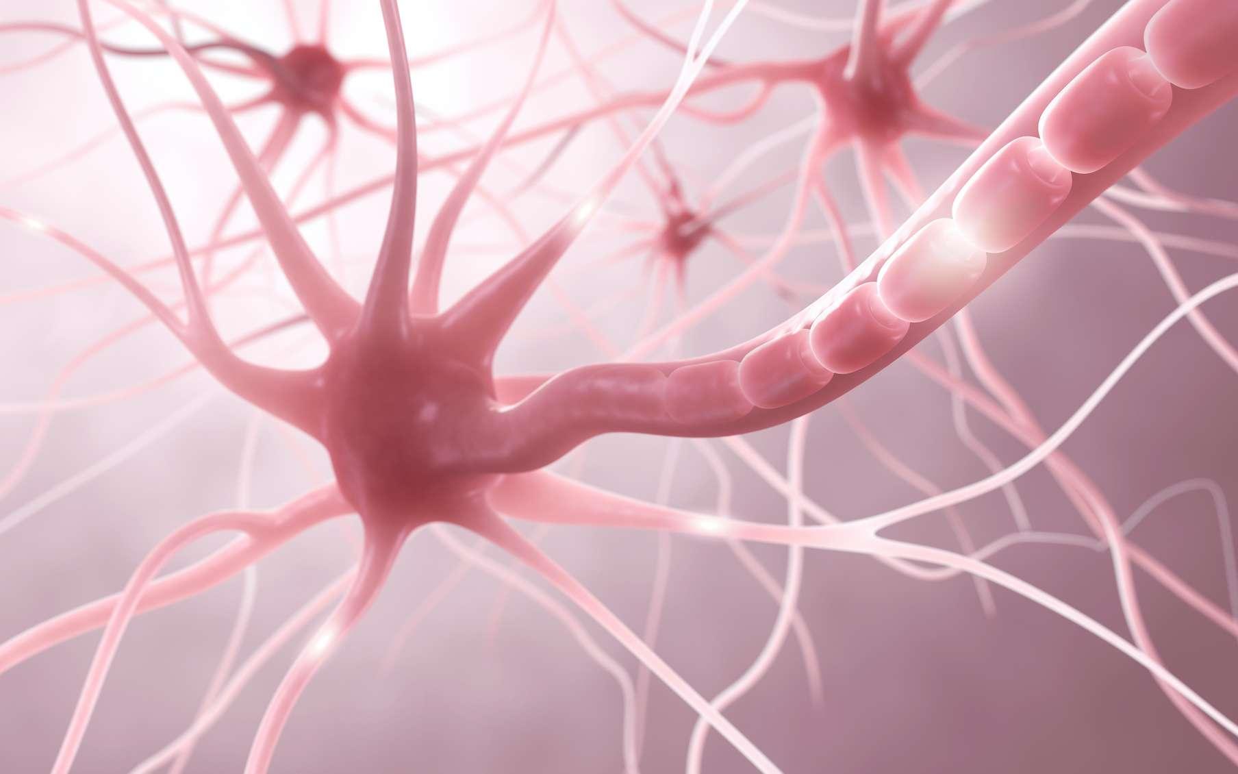 La maladie de Krabbe est une maladie génétique liée à un déficit de myéline du système nerveux central et périphérique. © ag visuell, Adobe Stock