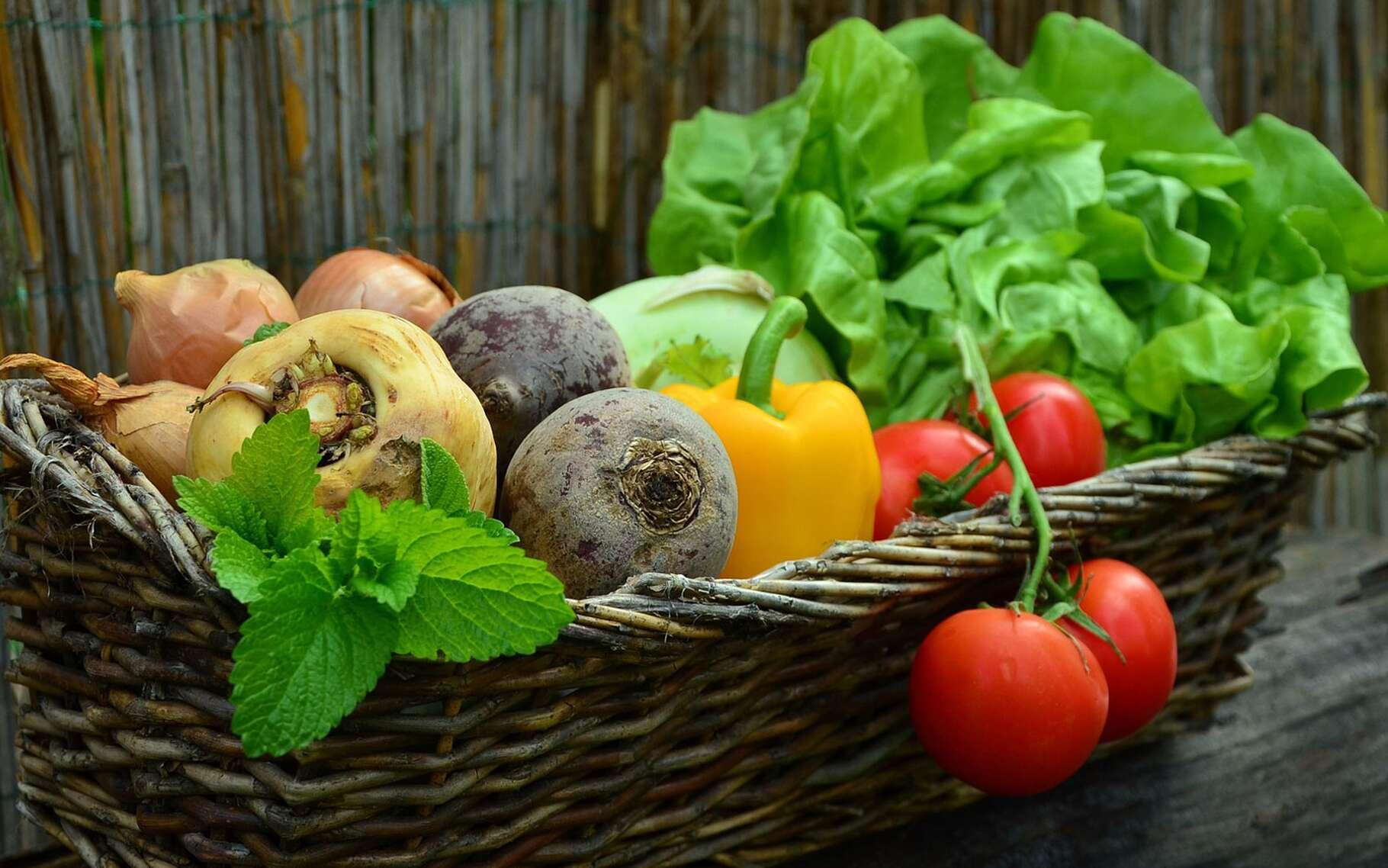 Les légumes bio sont excellents pour la santé. © Congerdesign, Pixabay, DP