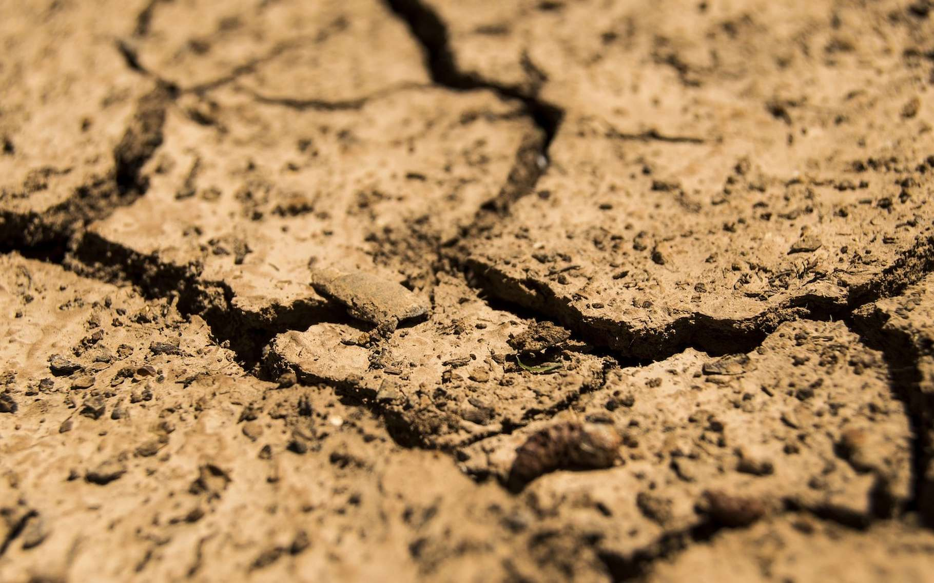 Le concept de sécheresse correspond à une notion plutôt temporelle alors que le concept d'aridité apparaît comme spatial. © daeron, Pixabay License