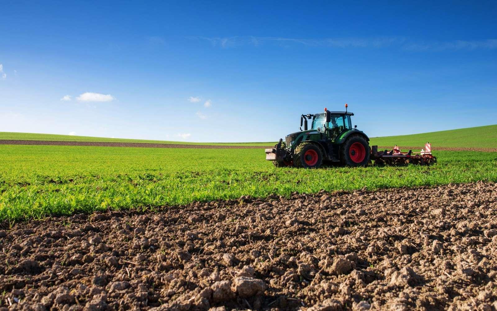 Avec le développement du commerce international, les chenilles hybrides pourraient rapidement se propager à tous les continents. © Image'in, Fotolia