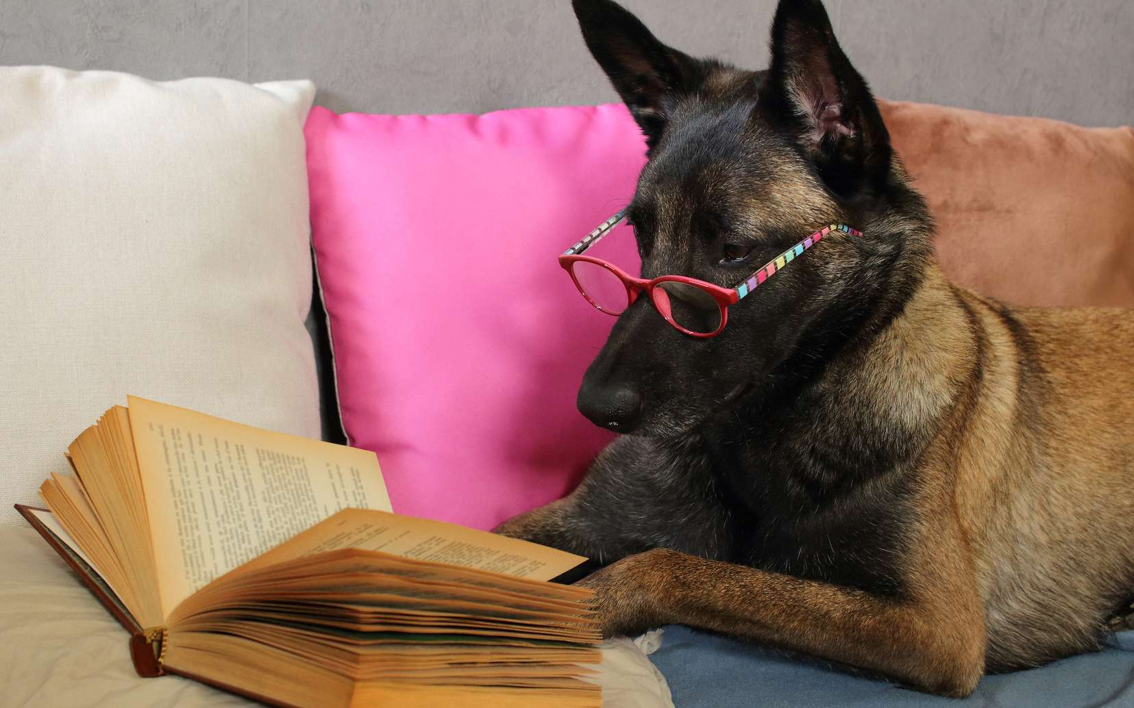 Le chien est l'un des premiers animaux à avoir été domestiqué par l'Homme. © Nono&Jessi, Fotolia