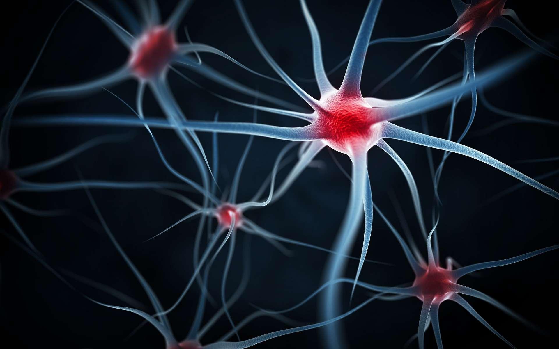 Le centre de contrôle de la douleur dans le cerveau ne comprend que 30 neurones installés dans l'hypothalamus qui coordonnent la diffusion de l'ocytocine, une hormone aux propriétés analgésiques. © Leigh Prather, Shutterstock