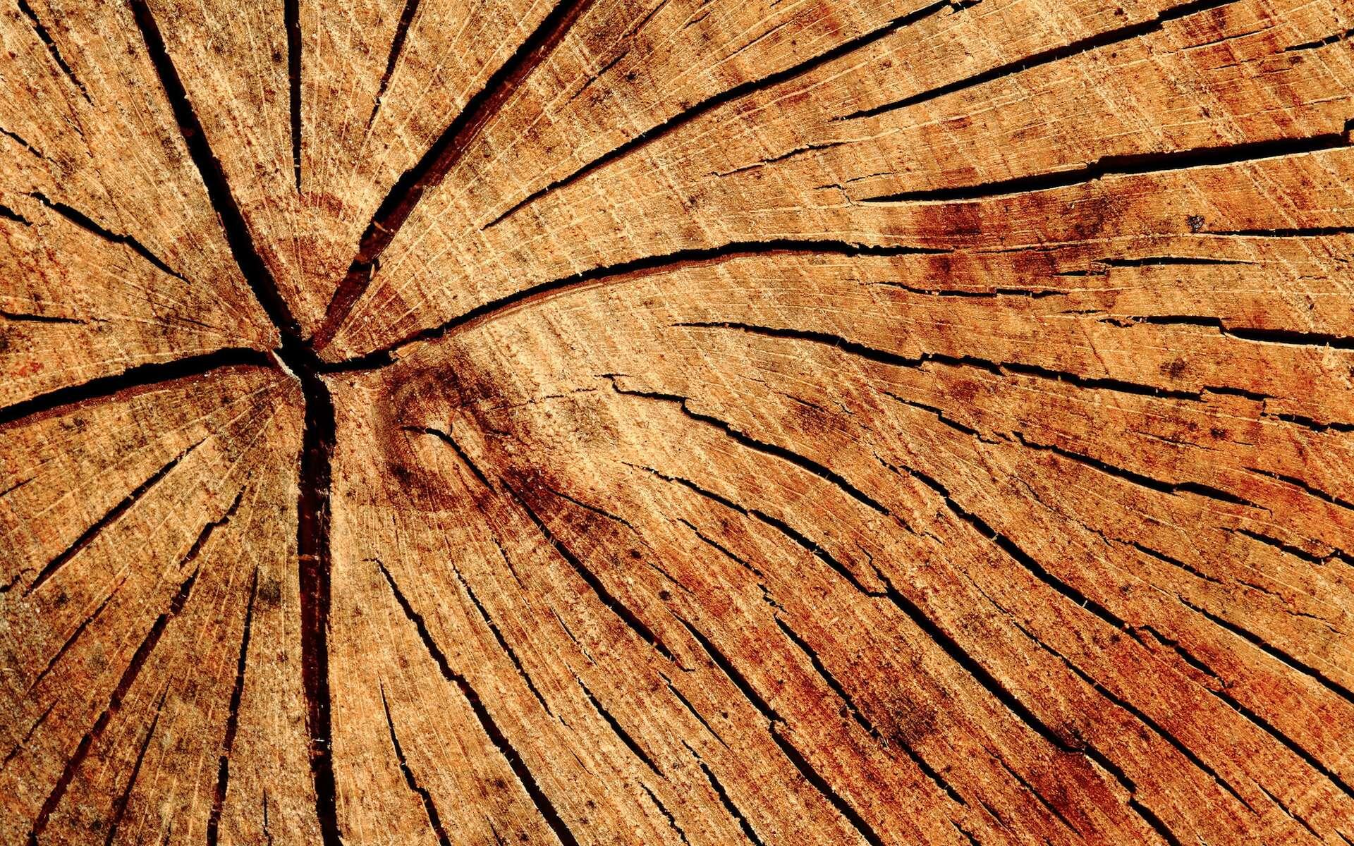 Le bois transparent mis au point par des chercheurs suédois prend un aspect translucide lorsqu'il libère la chaleur stockée. © Etienne, Flickr, CC by-nc-nd 2.0