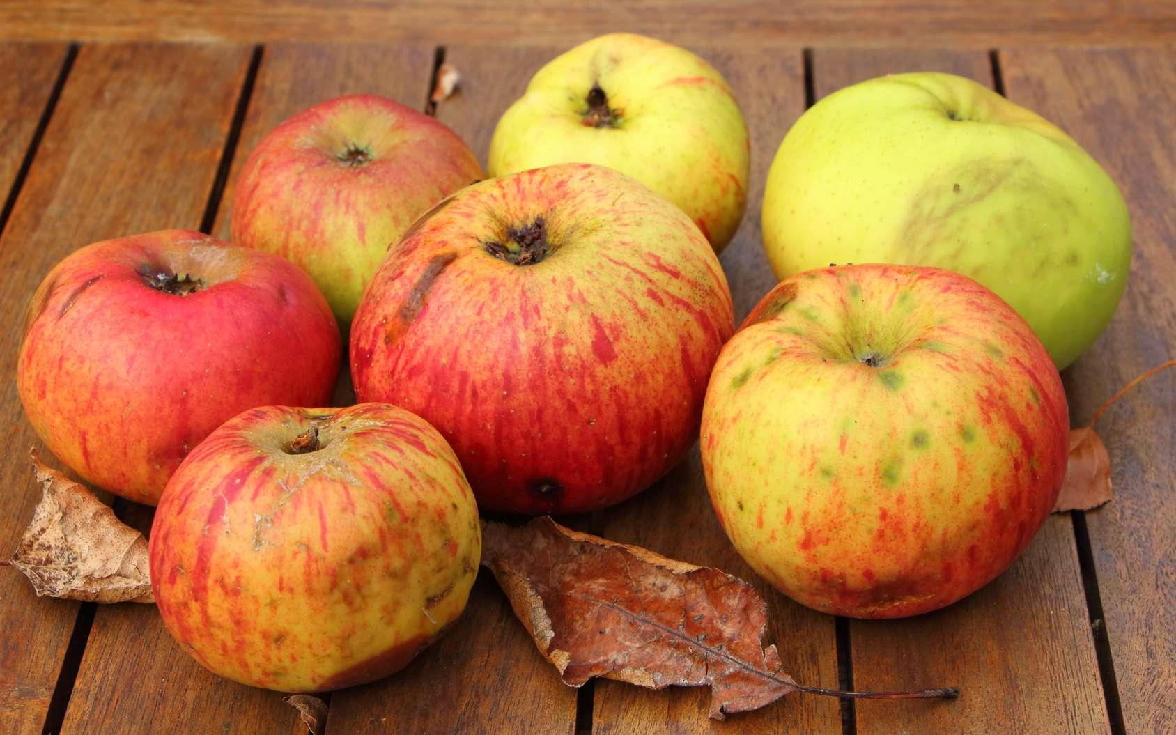 L'éthylène dégagé par les fruits mûrs accélère la maturation des autres fruits. © oceane2508, fotolia
