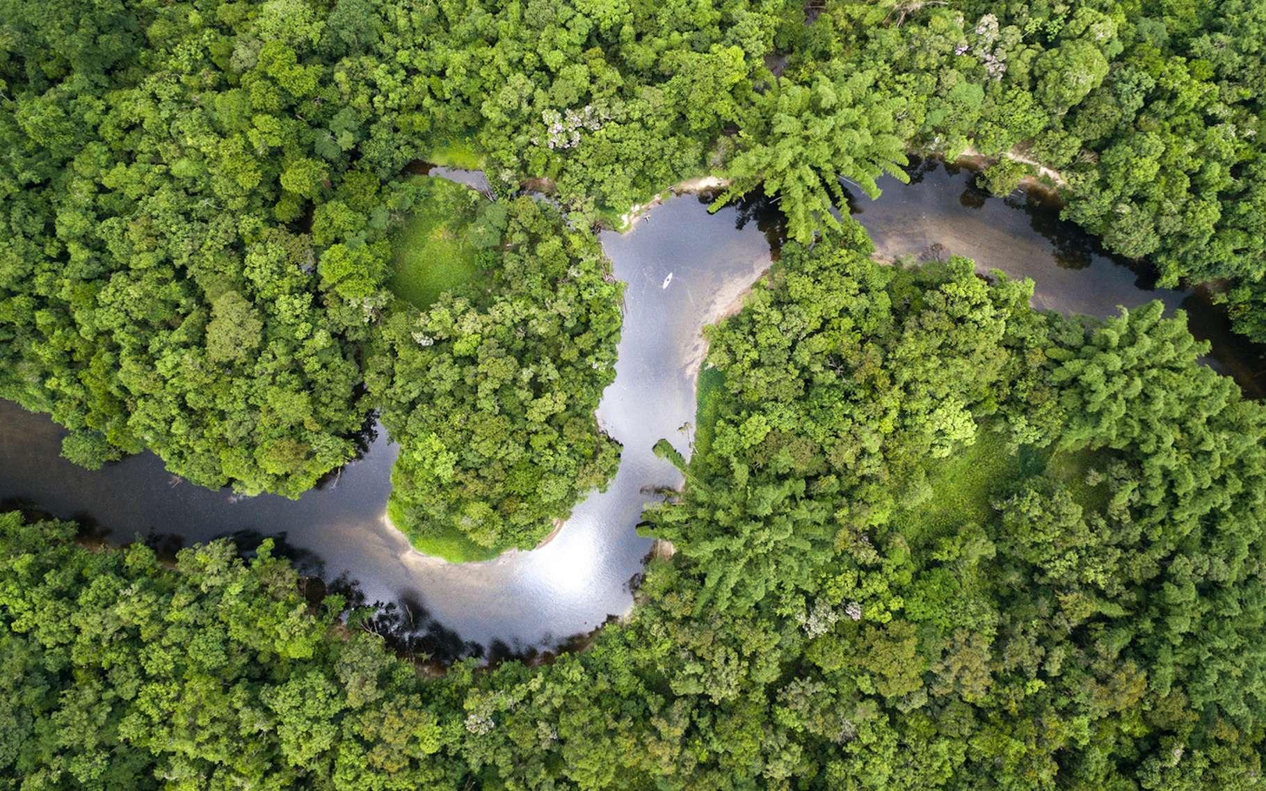Dans les quinze ans à venir, la forêt amazonienne devrait croître plus lentement à cause d'un manque de phosphore. © gustavofrazao, Fotolia