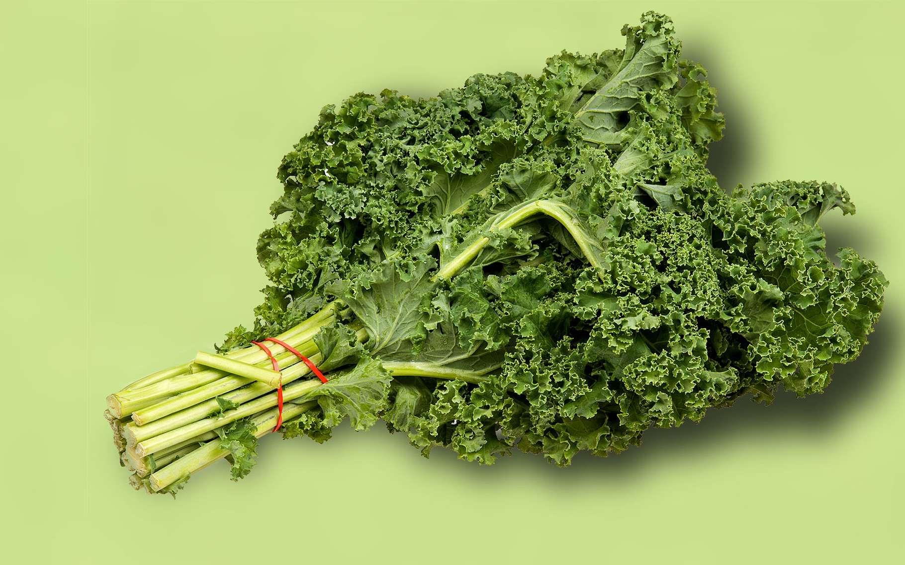 Le chou kale aux apports nutritifs impressionnants. © Evan-Amos, Wikimedia commons, Domaine Public