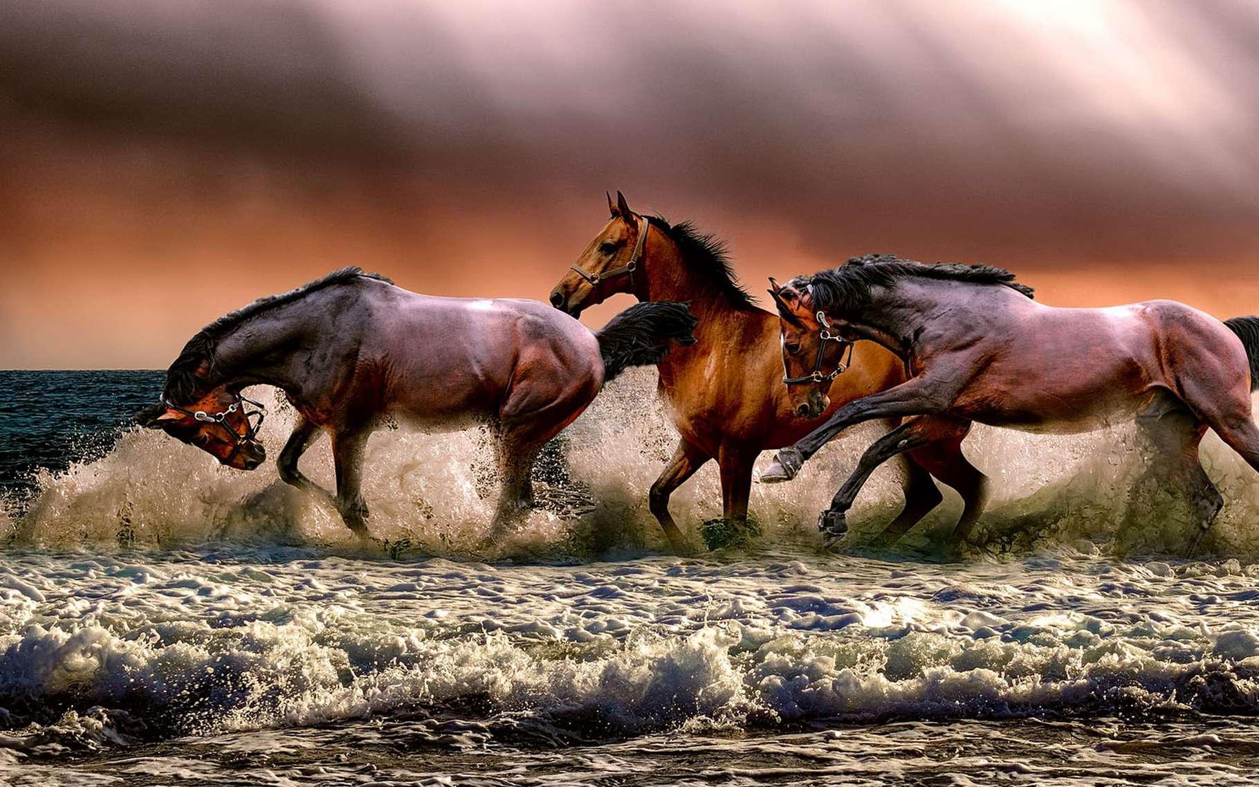 Comment partager un troupeau de chevaux en suivant les dernières volontés d'un défunt. © ATDSPHOTO, Pixabay, DP