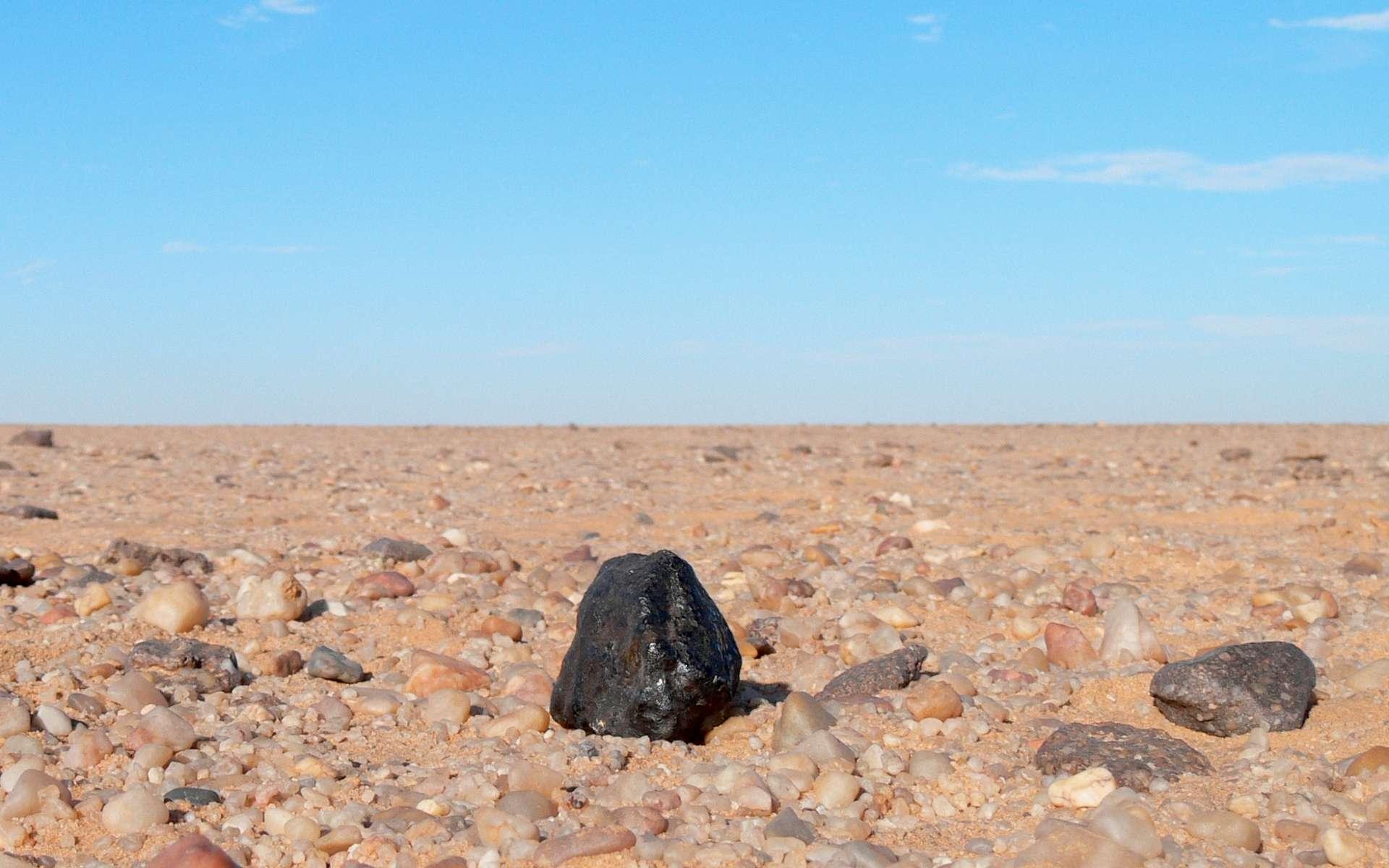 Un fragment de la météorite Almahata Sitta dans le désert de Nubie. Sa croûte de fusion noire est bien visible. Elle a été produite par son entrée à grande vitesse dans l'atmosphère ce qui a fait fondre la roche en surface et permet de la distinguer des autres. © P. Jenniskens, Seti Institute