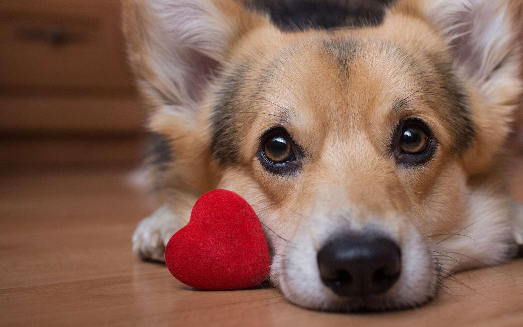 Vivre avec un chien est-il un gage de meilleure santé ? © Veronika7833, Fotolia
