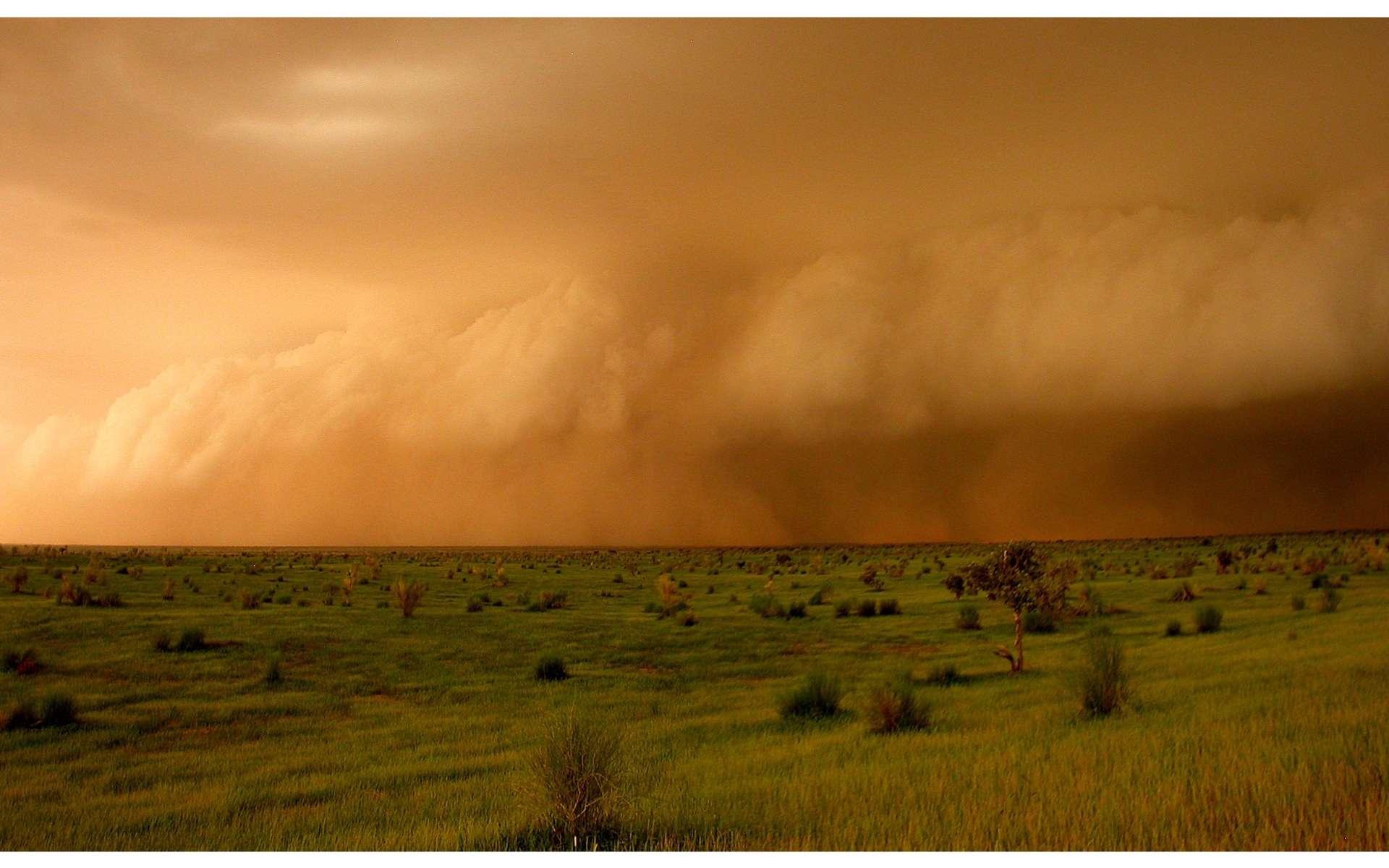 Certains orages forment parfois un front pouvant s'étendre latéralement sur des centaines de kilomètres. Ils produisent alors une ligne de grains. © Françoise Guichard et Laurent Kergoat/CNRS
