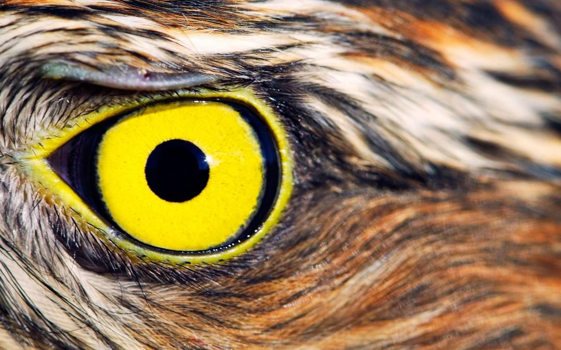 En s'inspirant du fonctionnement de la vision de l'aigle, les chercheurs de l'université de Stuttgart nous offrent encore un bel exemple de biomimétisme. © Mycteria, Fotolia