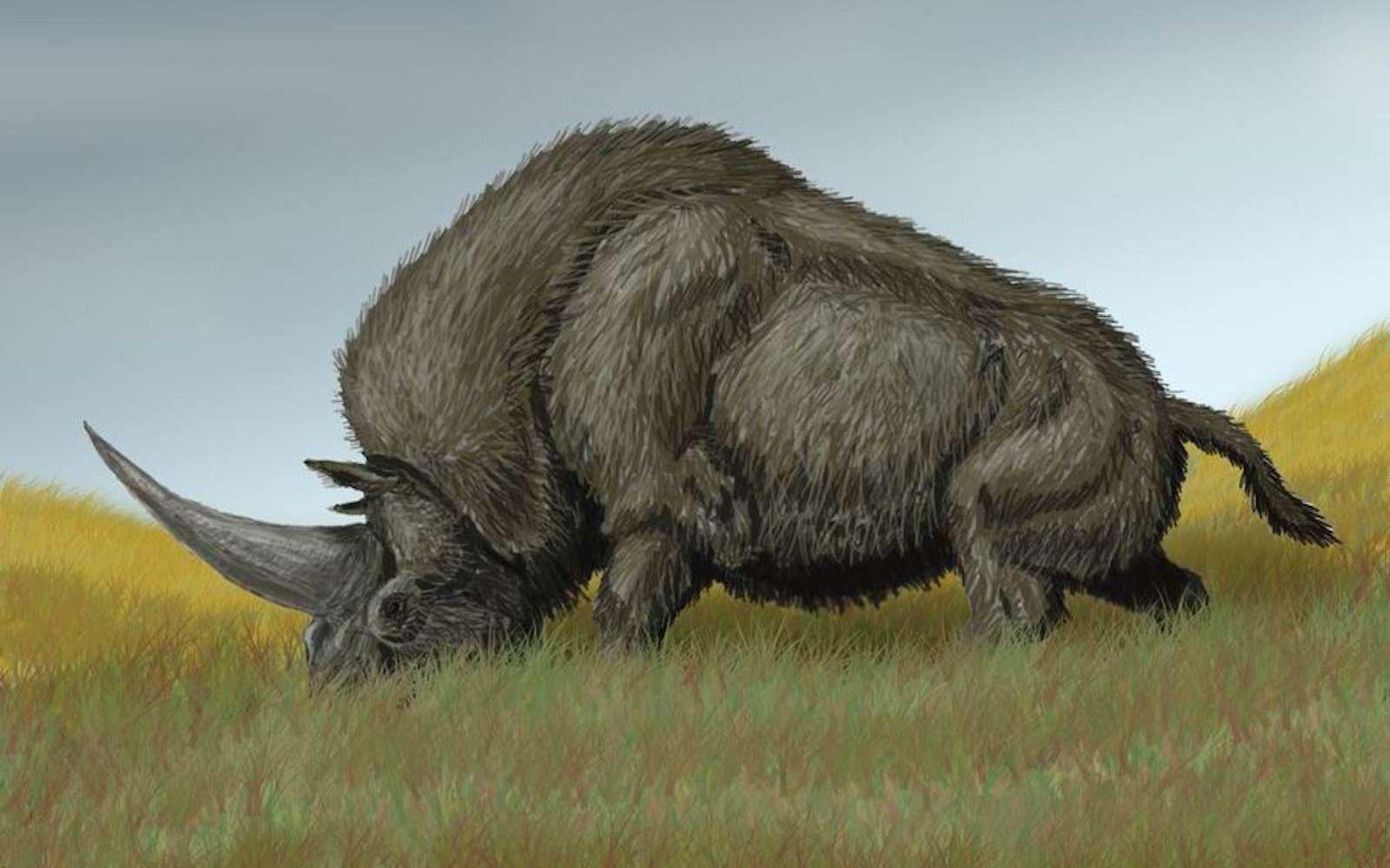 Elasmotherium sibiricum, la licorne sibérienne éteinte il y a 36.000 ans. © Bogdanov, Wikipedia