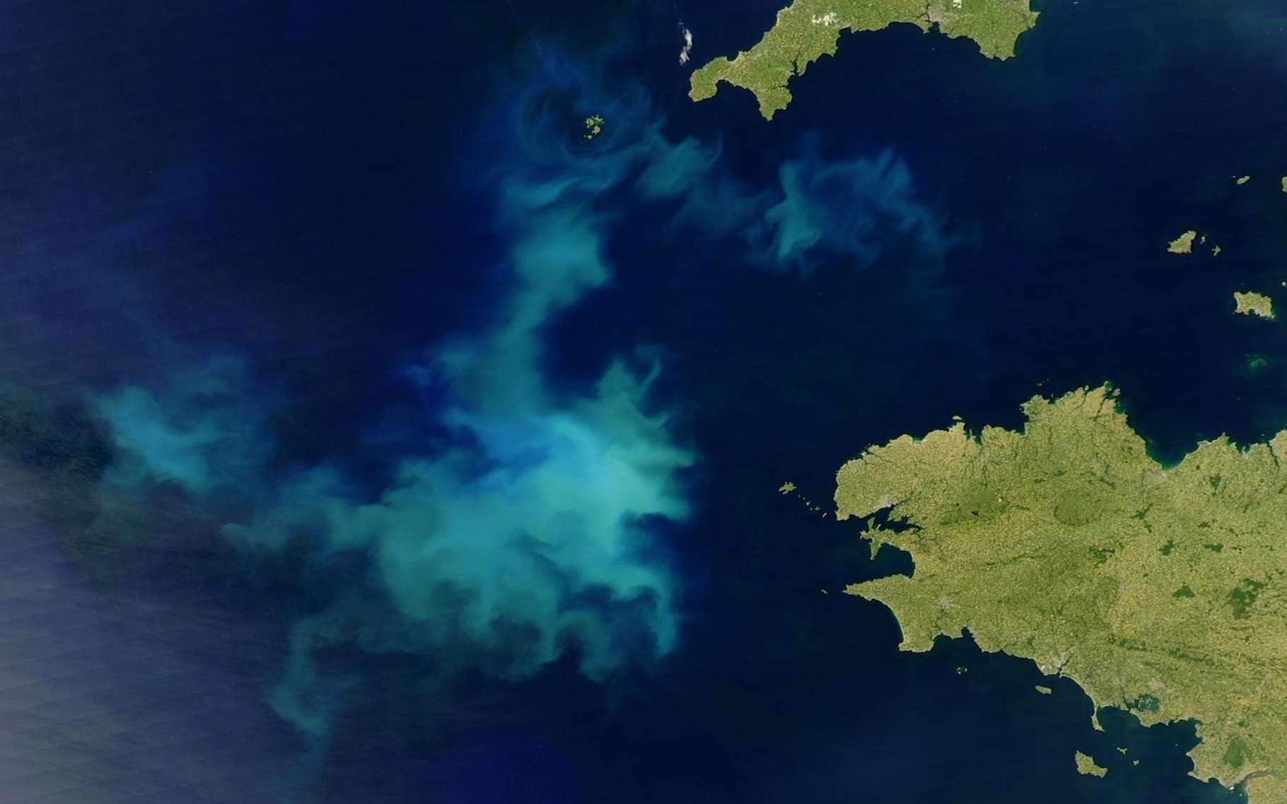 Les coccolithophores sont des organismes unicellulaires tellement nombreux dans les océans que leur floraison est visible depuis l'espace, ici au large de la Bretagne. La bonne nouvelle – pour la chaîne alimentaire et le stockage du carbone –, c'est qu'ils semblent armés pour résister au réchauffement climatique. © Nasa