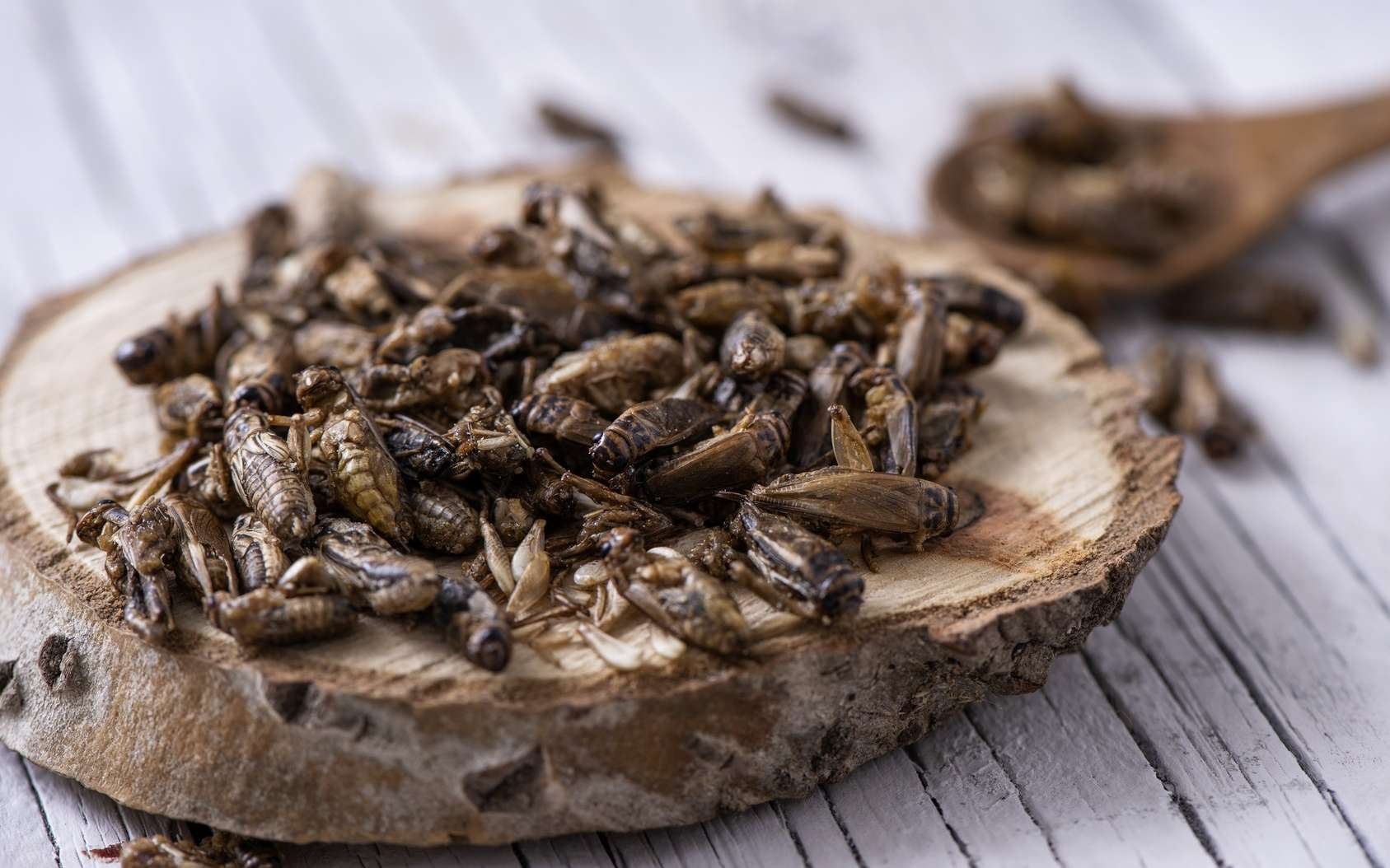 Pourquoi pas des insectes frits pour l'apéro ? © nito, Fotolia