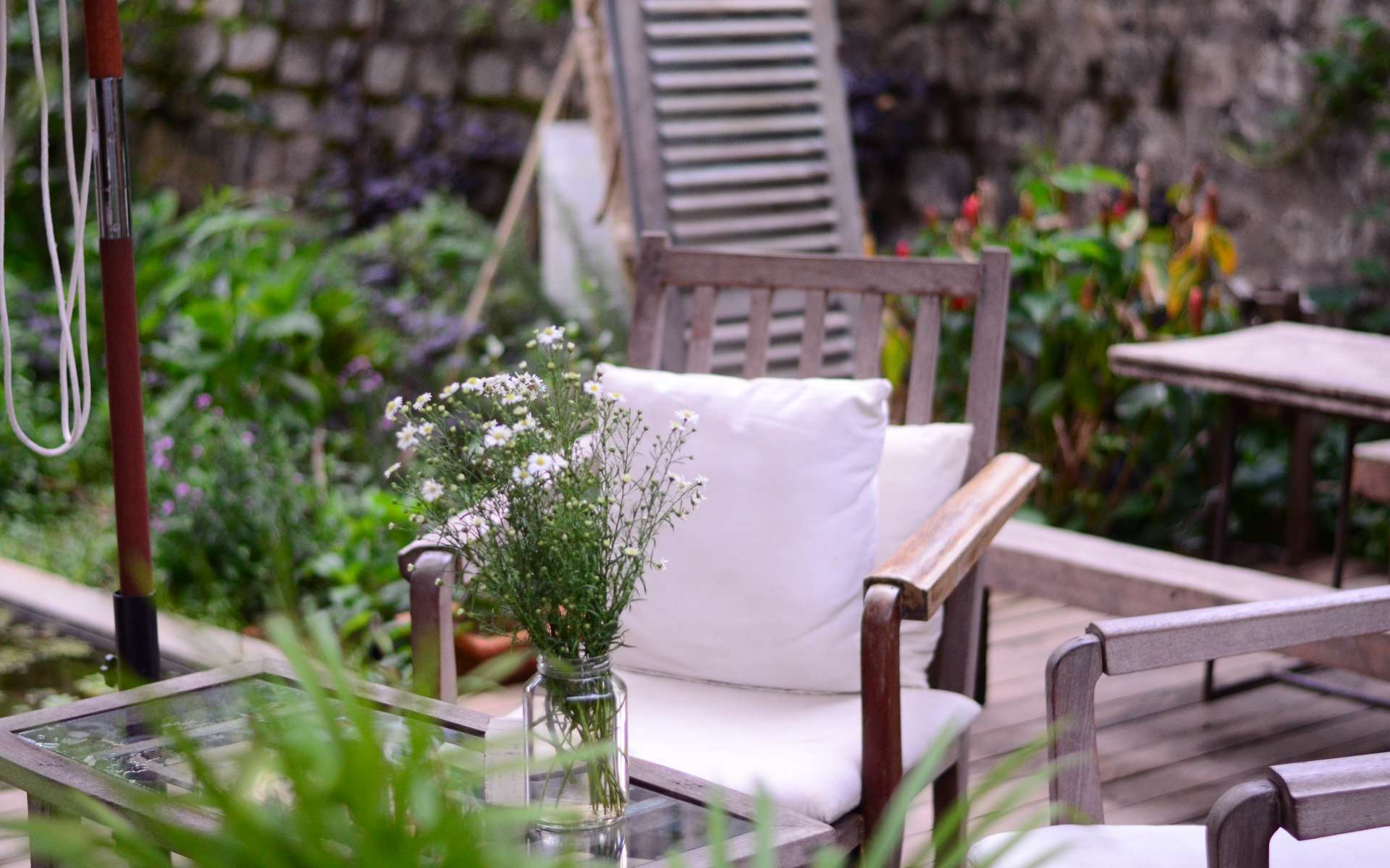 French Days Cdiscount : bons plans jardin © Tanny Do, Unsplash