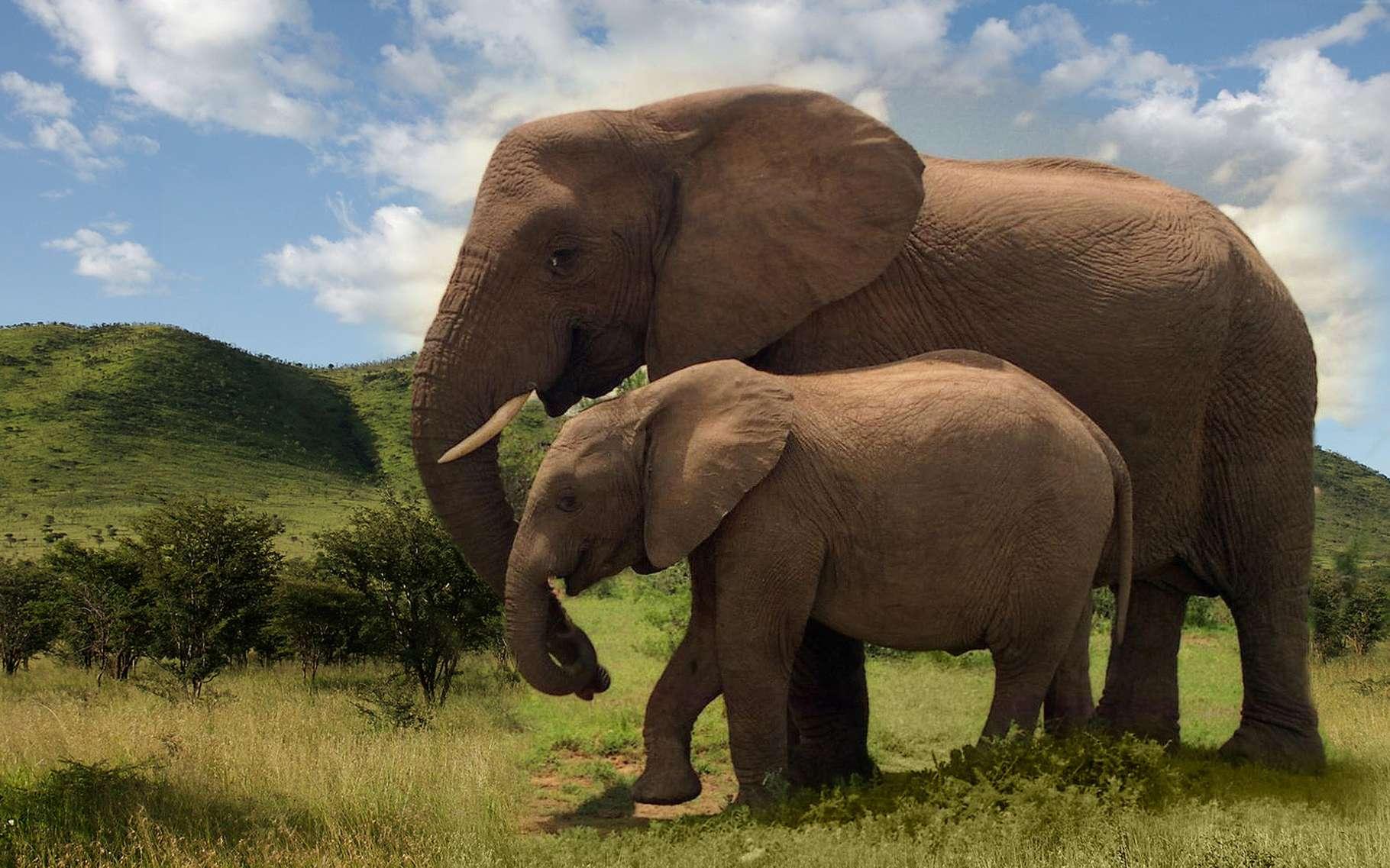 L'éléphant : plus grand animal terrestre actuel | Dossier