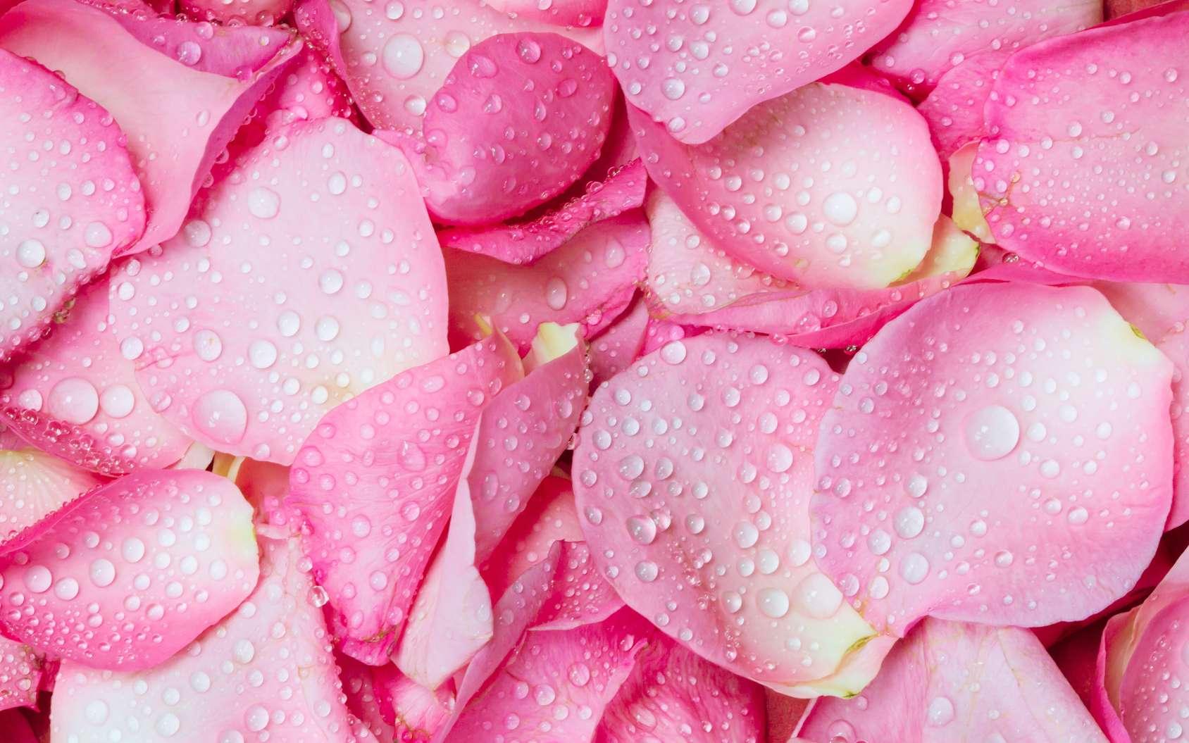 Les bienfaits de l'eau de rose sur la peau sont nombreux. Le mélange possède notamment des propriétés anti-inflammatoires, astringentes et tonifiantes. © pinkomelet, fotolia