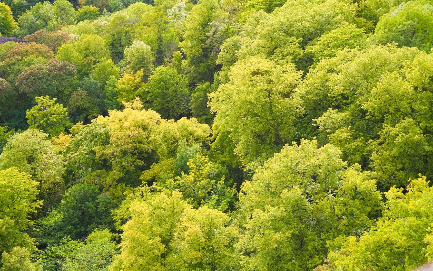 Selon une étude, les forêts naturelles sont les seules qui pourraient nous aider à lutter contre le réchauffement climatique. © Mathias Lamamy, Fotolia