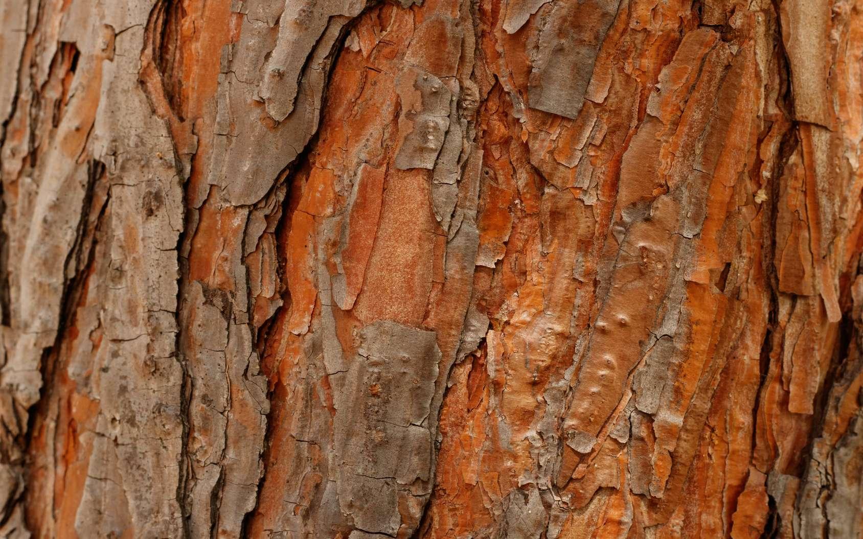 Le nouvel isolant en question est à base de bois ; il est aussi très résistant et hypoallergénique. © Anna Kubczak, Fotolia