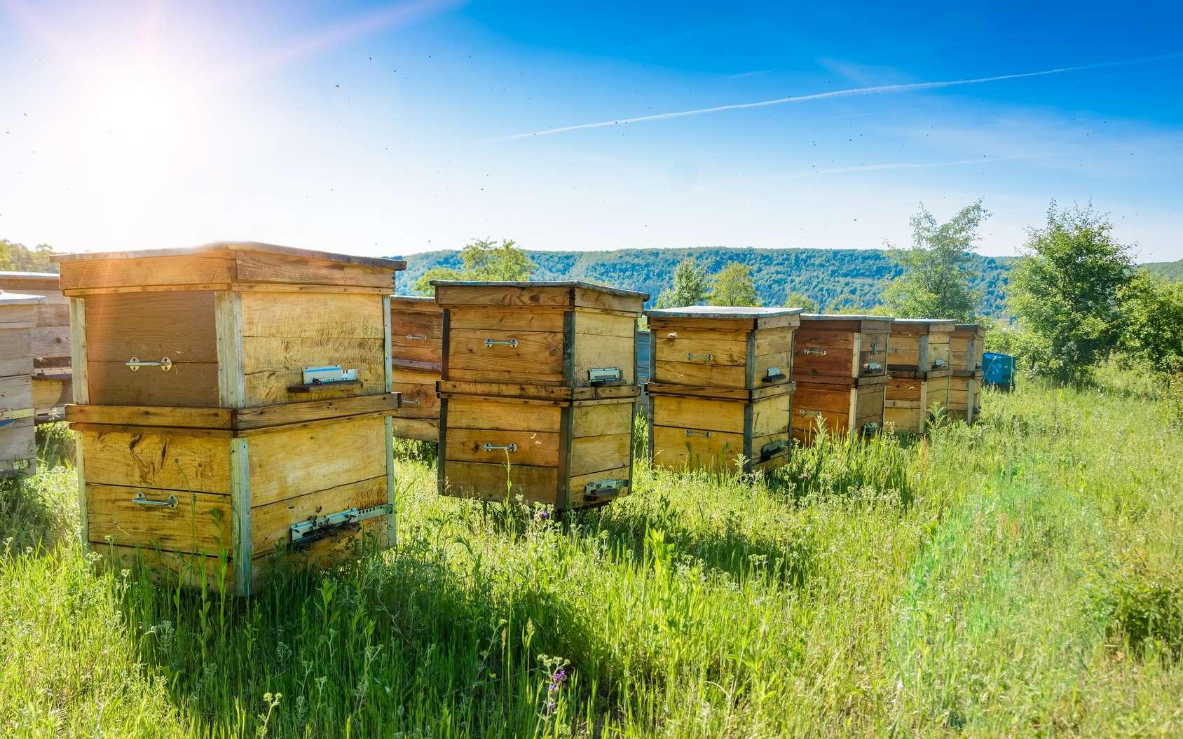 Les abeilles sont les plus connues des animaux pollinisateurs. Leur rôle pour l'agriculture est crucial. © kosolovskyy, Fotolia