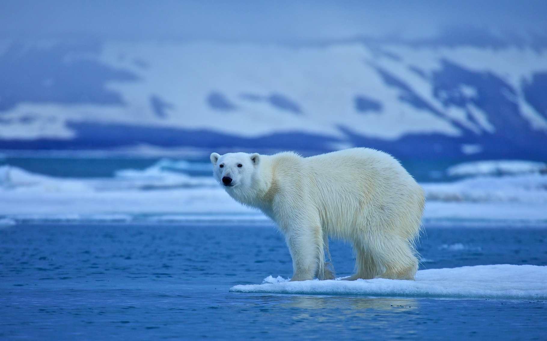 Les données qu'ils ont recueilli dans l'Arctique pendant plus d'un an laissent penser aux chercheurs que la région pourrait déjà avoir franchi son point de basculement. © st_iv, Adobe Stock