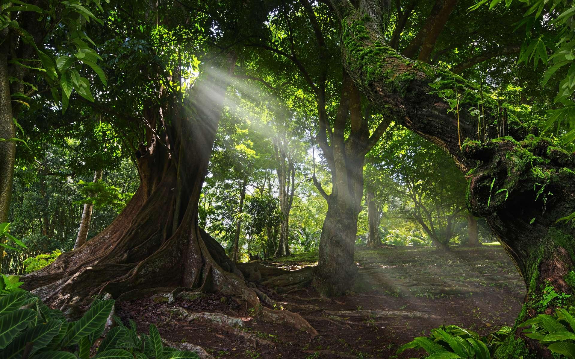 Les piggies ont développé un système de croyance autour des arbres de leur forêt. © quickshooting, Adobe Stock
