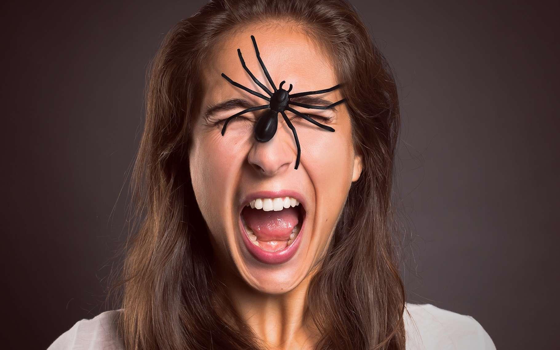 En matière de peur des araignées ou arachnophobie, les thérapies cognitivo-comportementales donnent de bons résultats. © lassedesignen, Fotolia