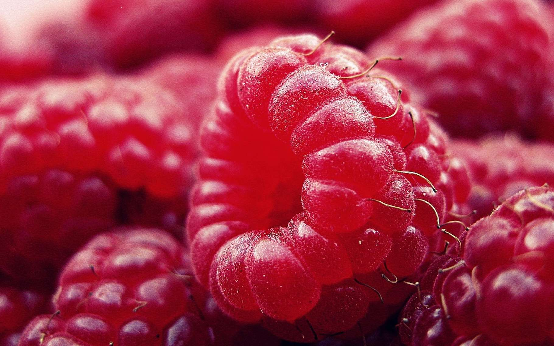 Le formiate d'éthyle est à l'origine du goût des framboises. © DGlodowska, Pixabay, CC0 Creative Commons