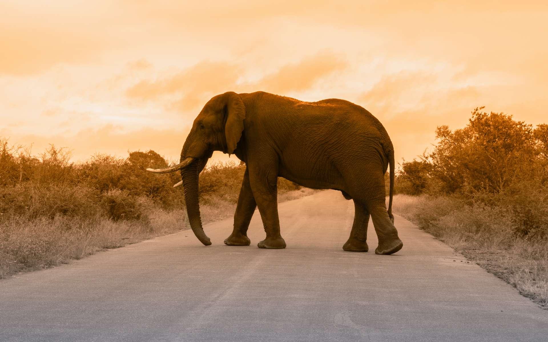 Dans les cinquante prochaines années, et selon les hypothèses, de nombreuses espèces de mammifères vont disparaître. Il faudra 3 à 5 millions d'années pour les remplacer. © Blaque X, Unsplash