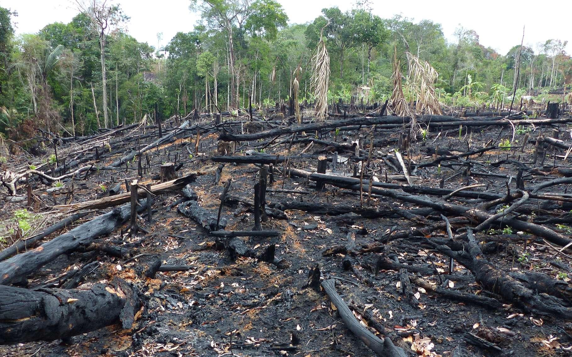 Triste spectacle de déforestation en Amazonie. © guentermanaus, shutterstock