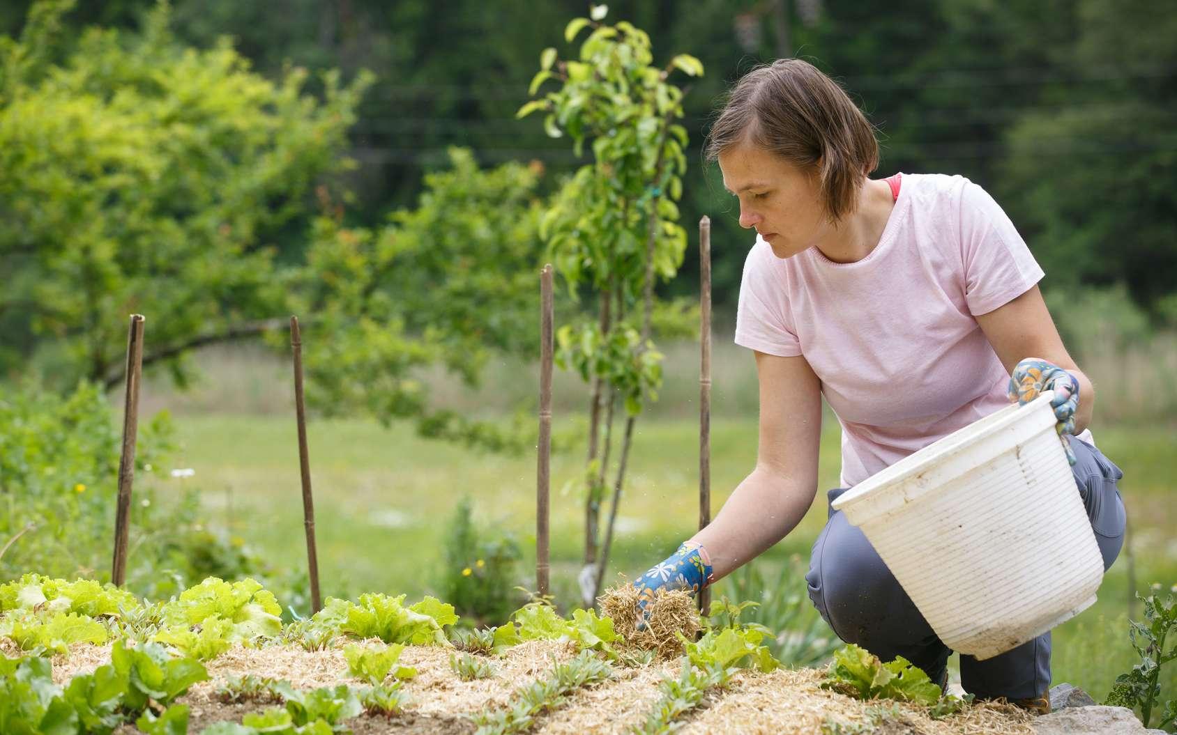 Jardin cultivé en permaculture. © zlikovec, fotolia