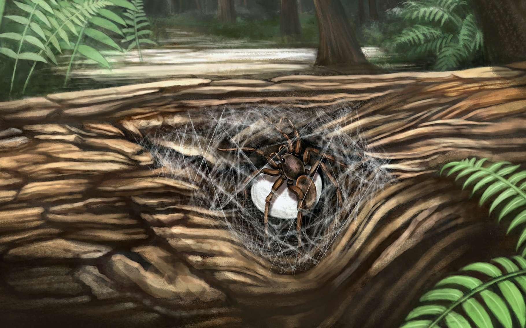 Au cœur du Crétacé, cette maman araignée prenait soin de ses petits. © Xiaoran Zuo, Université normale de la capitale (Chine)