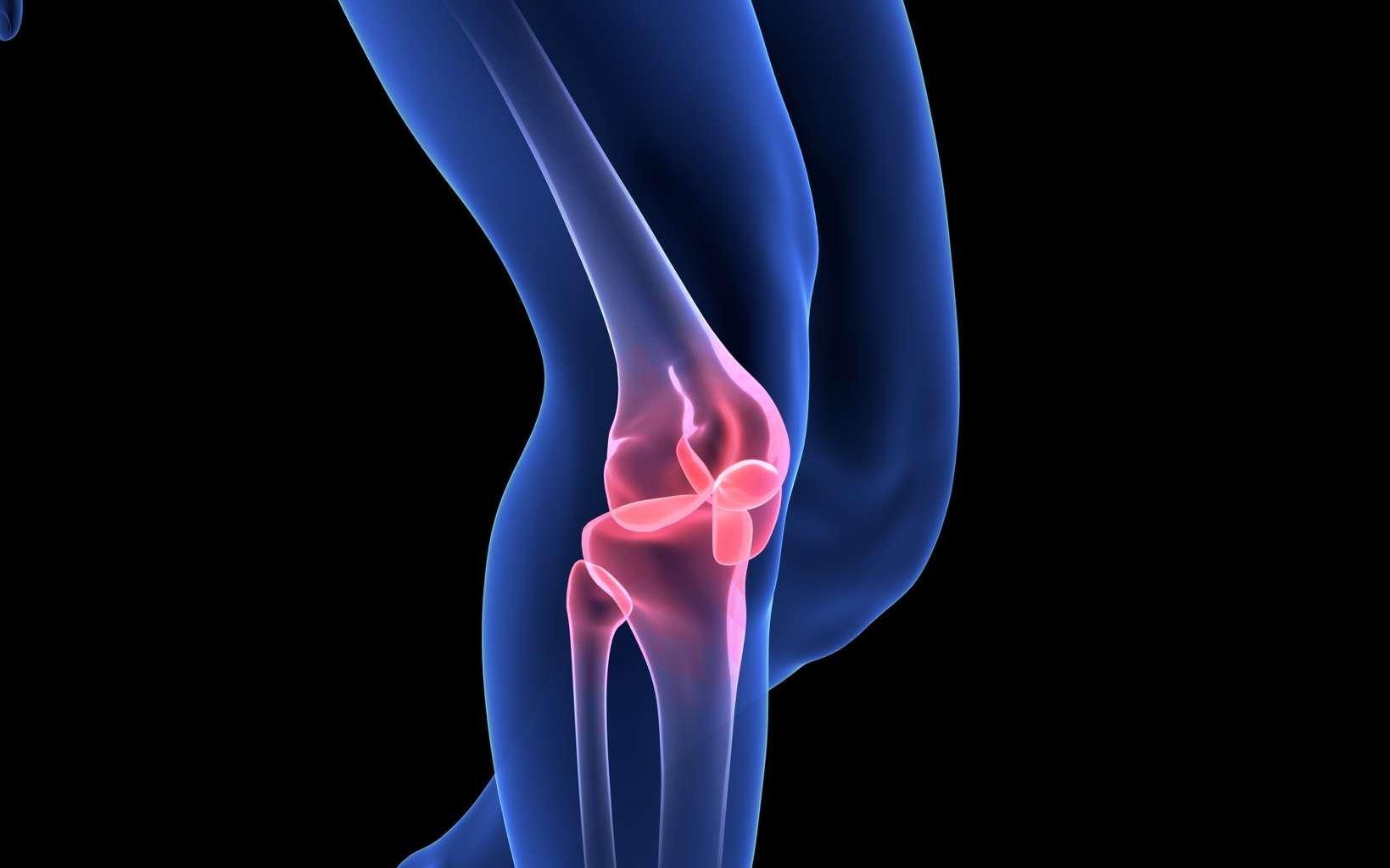 Le cartilage est un tissu conjonctif que l'on trouve à la surface des articulations. © m3ron, Fotolia