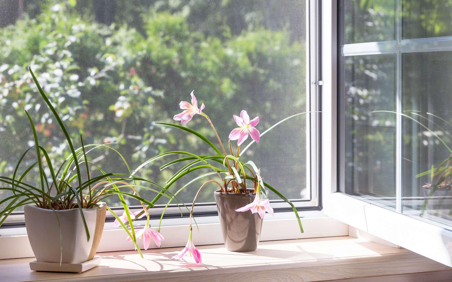 Quasi invisible, une moustiquaire permet d'ouvrir une fenêtre pour aérer la maison et profiter de la douceur estivale sans que les pollens et insectes pénètrent à l'intérieur. © Olga Ionina, Adobe Stock