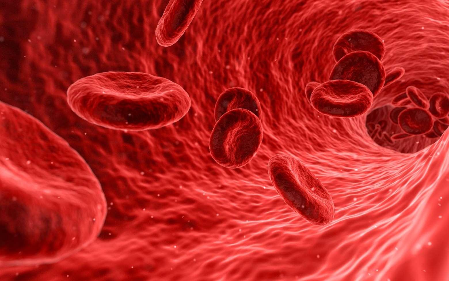 Ce que vous mangez et votre microbiome intestinal déterminent vos marqueurs sanguins. © Francis Bonami, Fotolia
