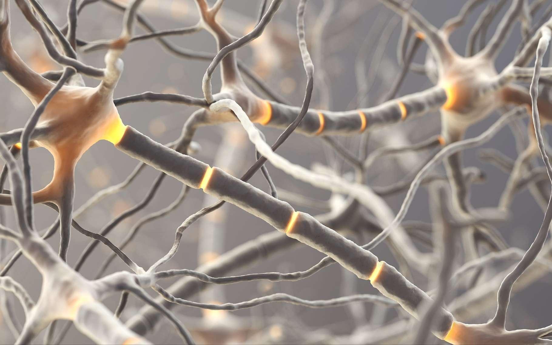 Le neurone miroir est actif lorsque l'individu fait un geste particulier ou s'il voit quelqu'un faire ce même geste. © martynowi.cz, Shutterstock