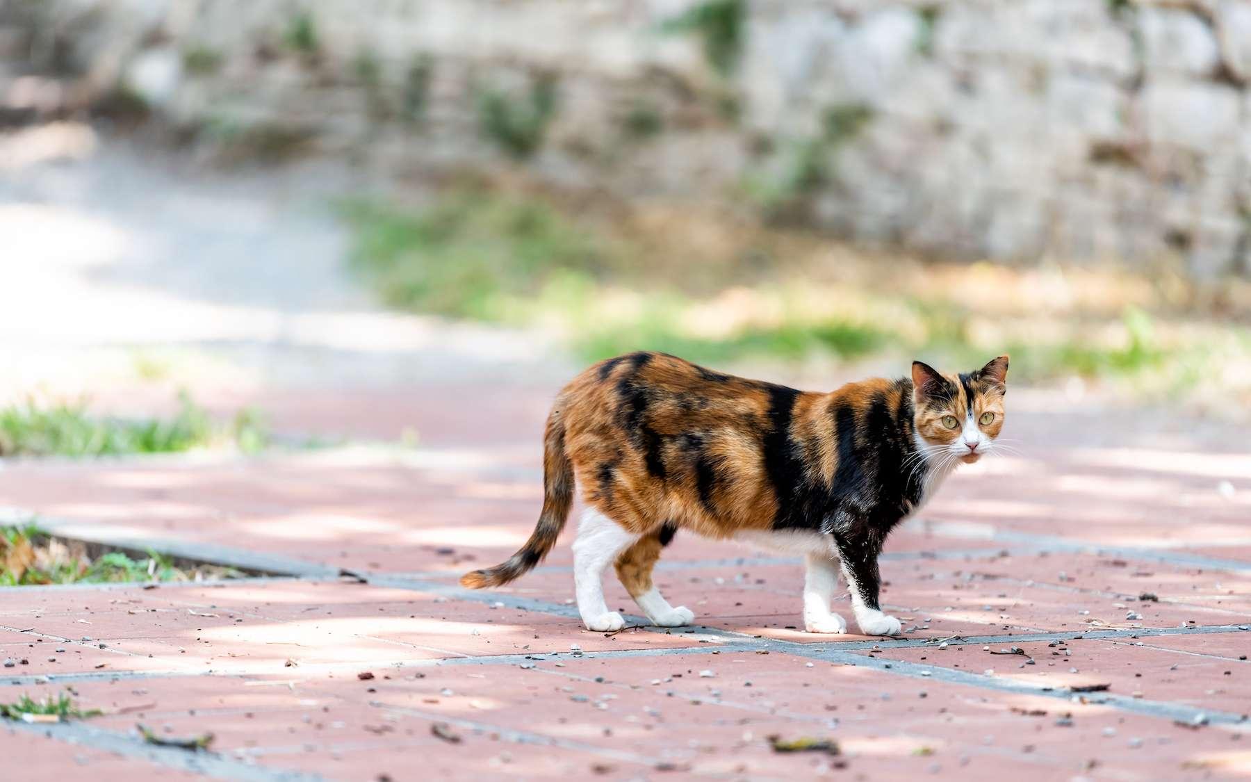 Un chat, atteint d'une maladie rare, terrorise l'Italie