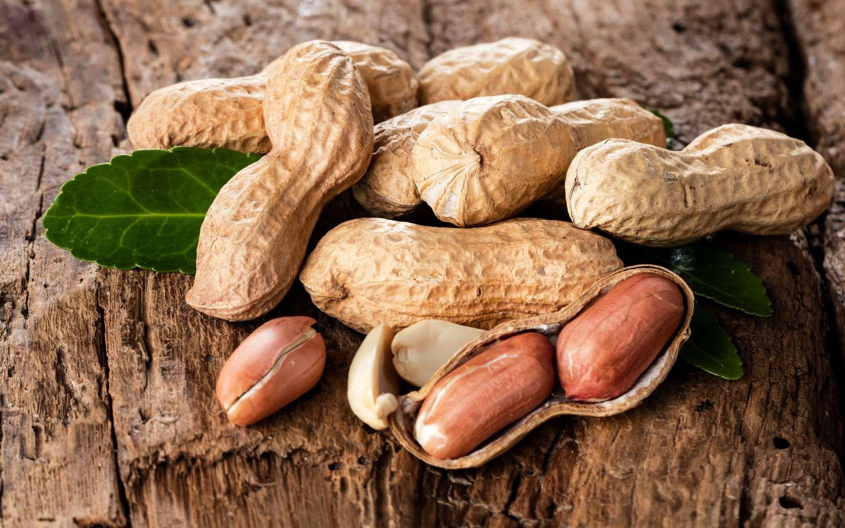 Les cacahuètes contiennent de l'arachide à l'origine d'allergies parfois mortelles. Pour l'heure, il n'existe pas de traitement. Mais d'ici à quelques années, une solution sous forme de patch arrivera peut-être en pharmacie... © karepa, Fotolia