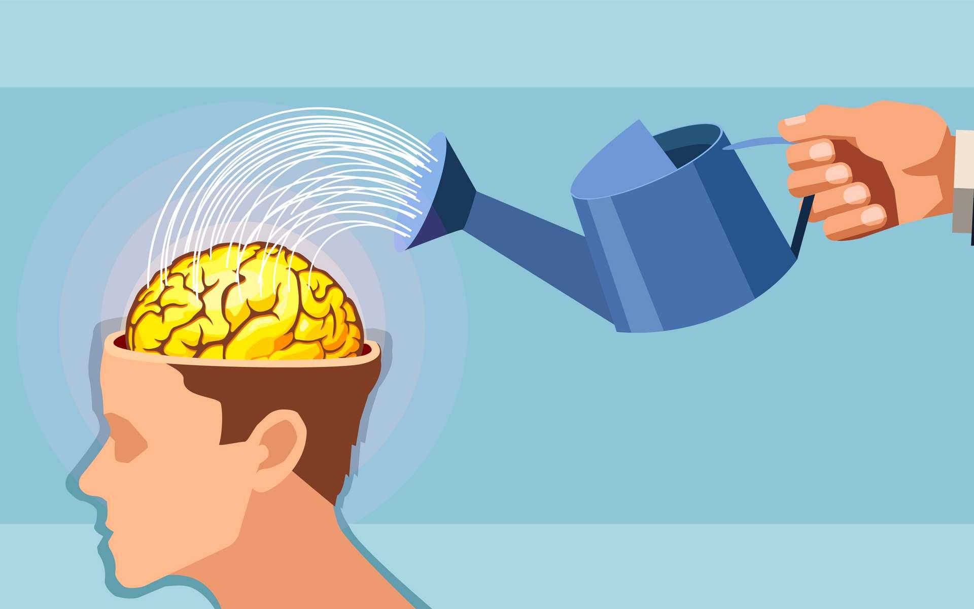 En image : le cerveau doit être irrigué. © Feodora, Adobe Stock