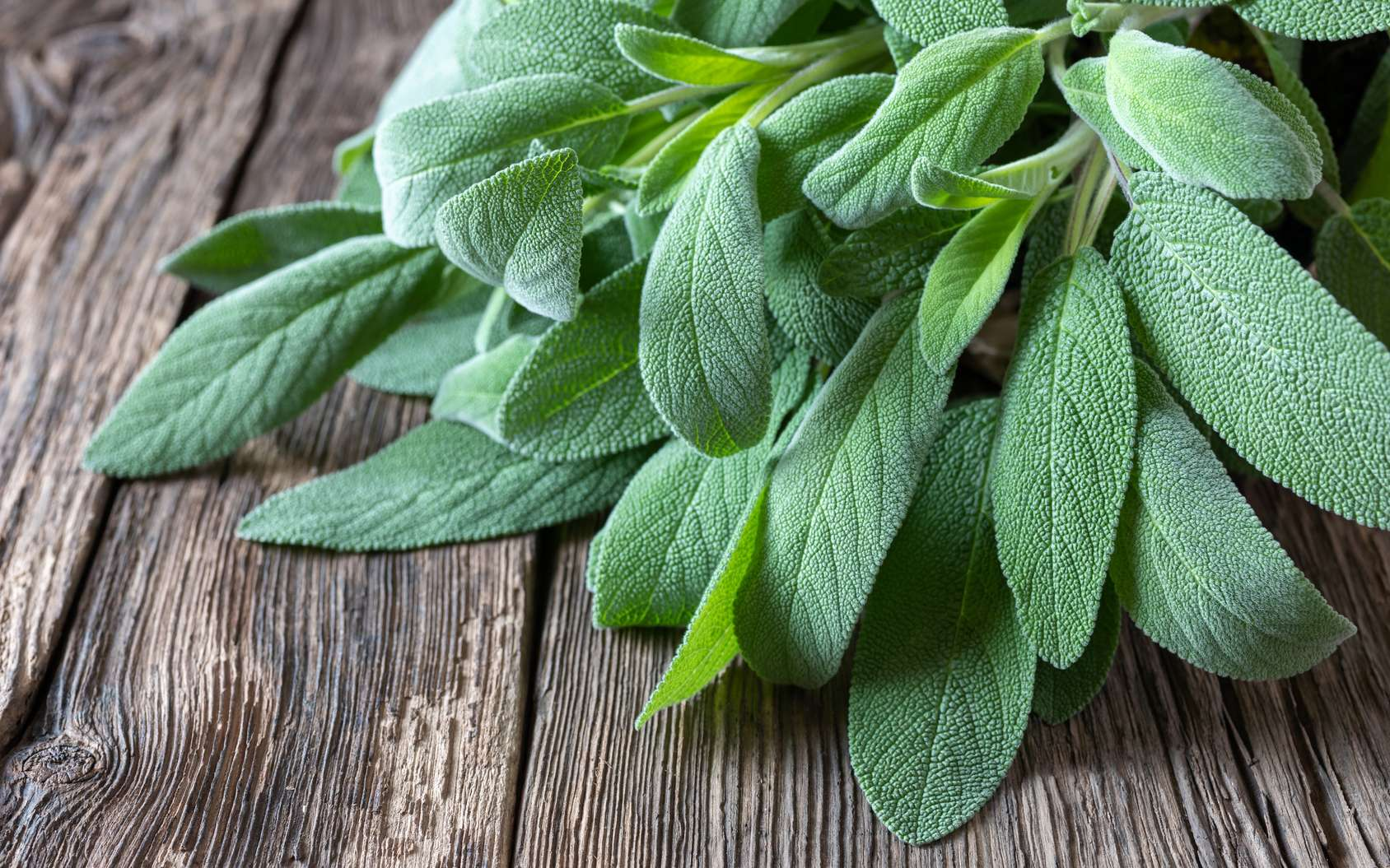 What are the benefits of officinal sage?