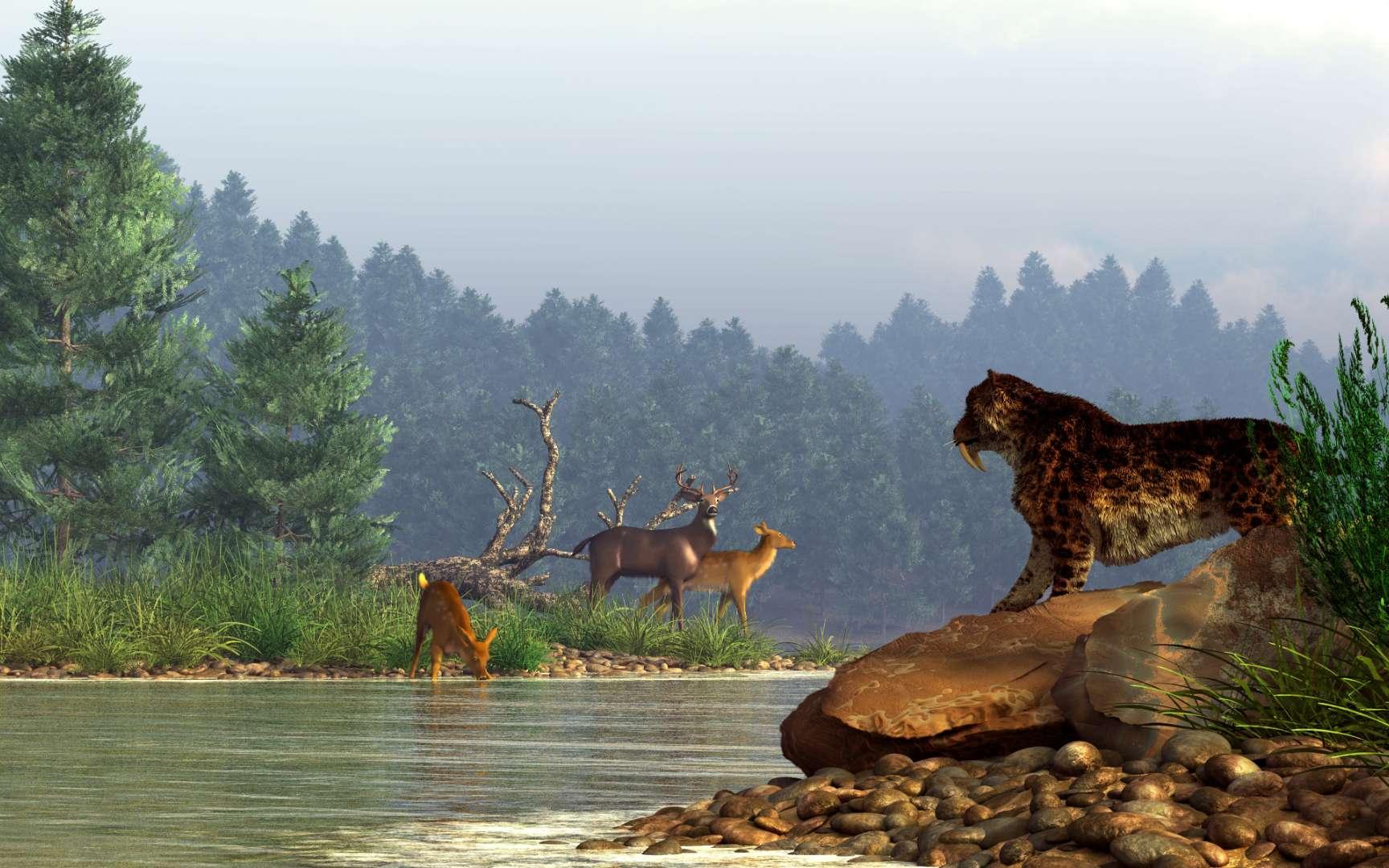 Illustration d'une scène du Pléistocène. Un tigre à dents de sabre regarde des cerfs au bord d'une rivière. © Daniel, Adobe Stock