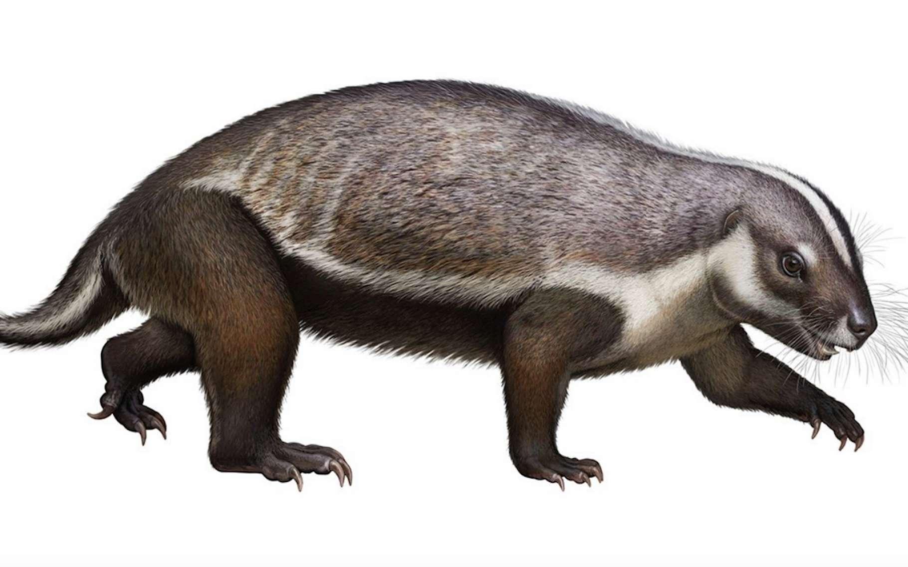 Ici, une illustration de ce que devait être l'aspect de l'Adalatherium, cet étrange mammifère découvert à Madagascar par des chercheurs du Denver Museum of Nature & Science (États-Unis). Selon eux, une pièce importante du puzzle de l'évolution des mammifères dans l'hémisphère sud. © Denver Museum of Nature & Science