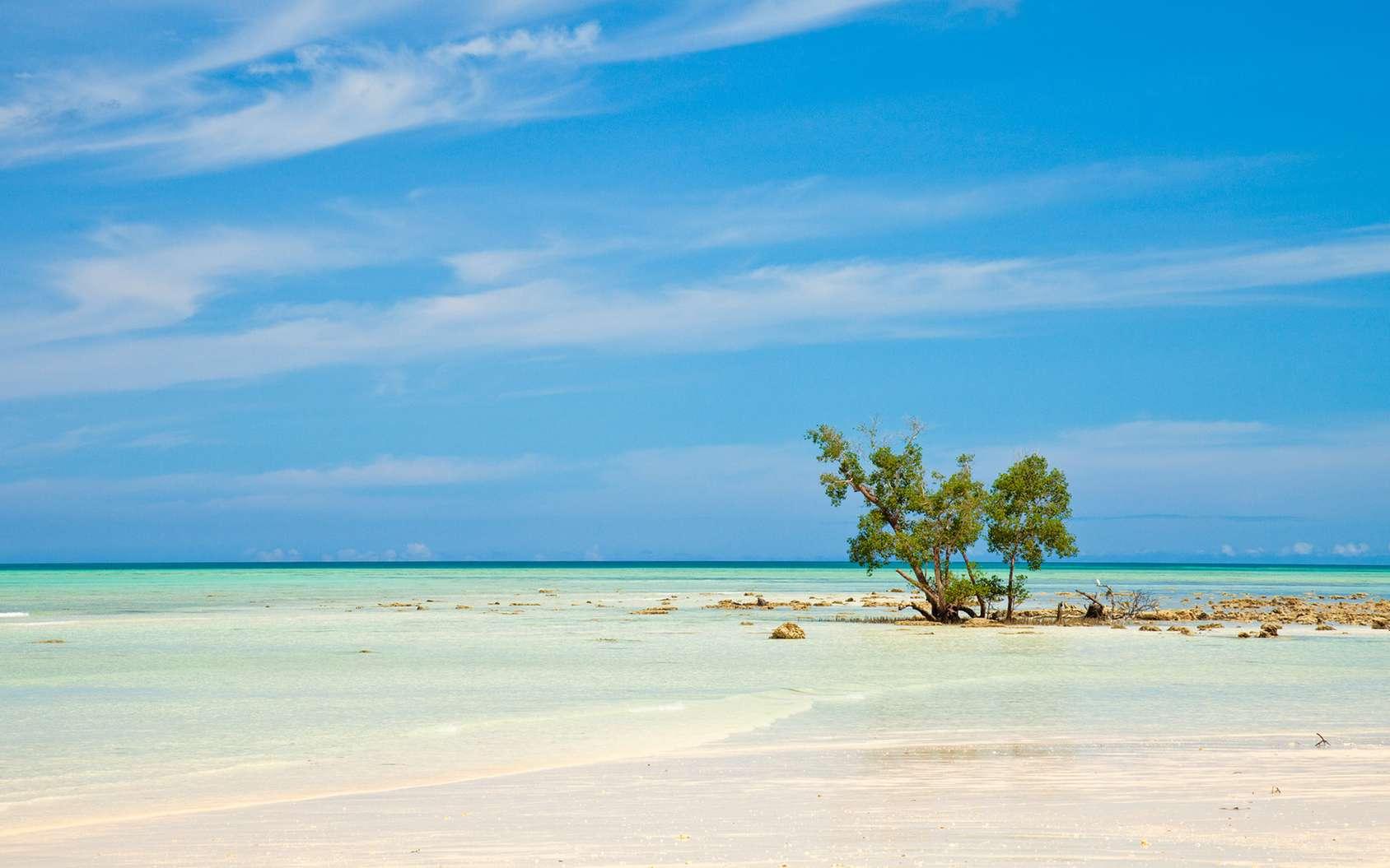Dans l'ouest du Pacifique, les îles bordées de mangroves sont celles qui résistent le mieux à la montée des eaux. © nstanev, Fotolia