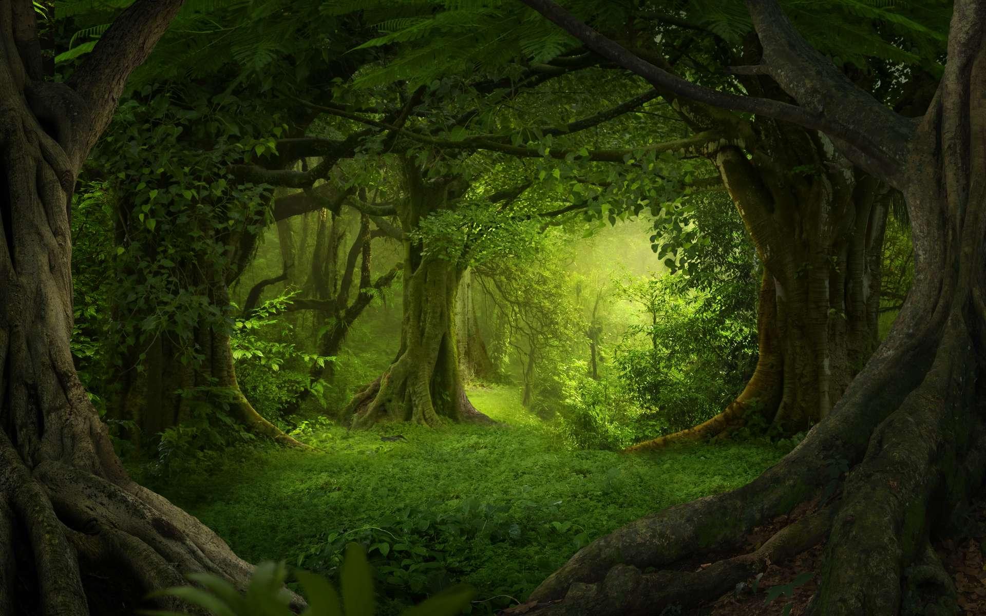 Le moteur de recherche Ecosia aurait permis de planter plus de 82 millions d'arbres. © Quickshooting, Adobe Stock